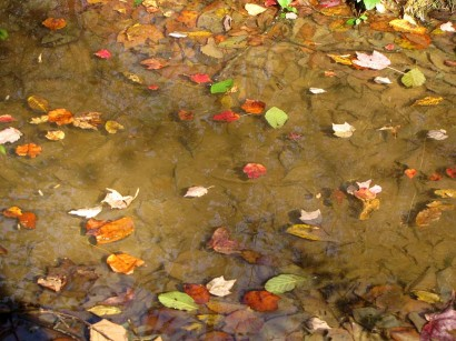 Colored leaves floating on water.