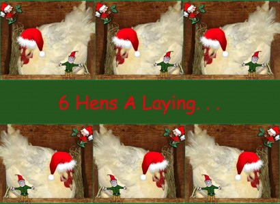 Six hens a laying!