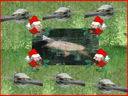 7 Turtles!