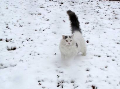 Spot walking through snow.