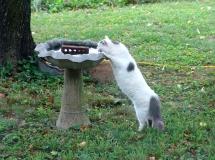 cat in yard