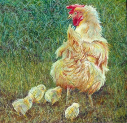 mother hen and 4 chicks