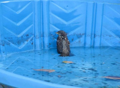 photo of bird in pool