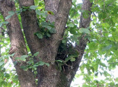 new squirrel nest
