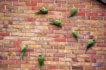 picture of green birds on red brick wall