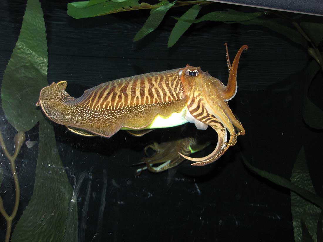 Ripley S Aquarium Of The Smokies Rural Ramblings