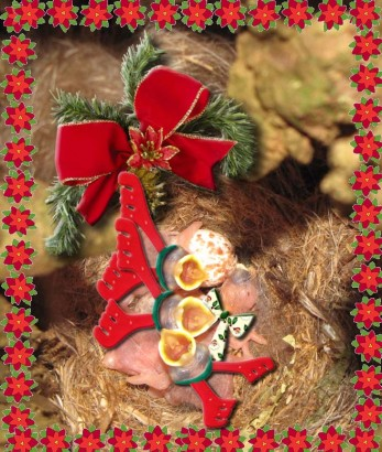 picture of baby birds dressed up for christmas