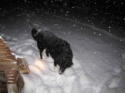 picture of dog in snowstorm