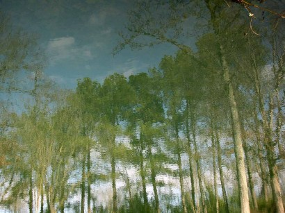 picture of pond reflection