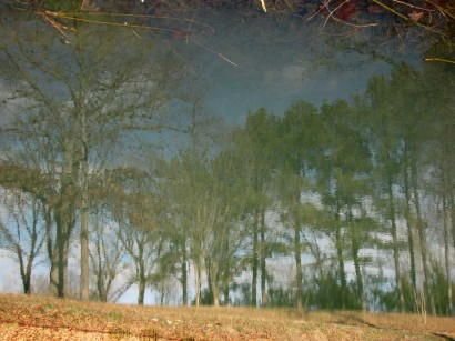 picture of pond reflection of trees
