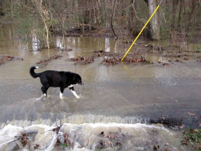 picture of dog walking on flooded road