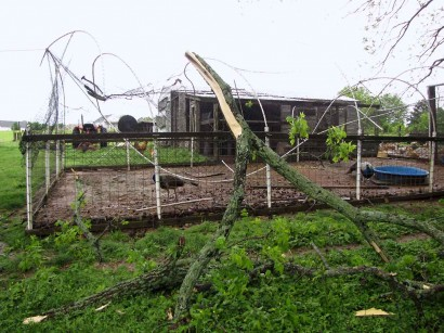 picture of fallen limb by aviary