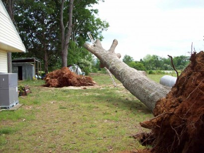 tornado aftermath - tree down
