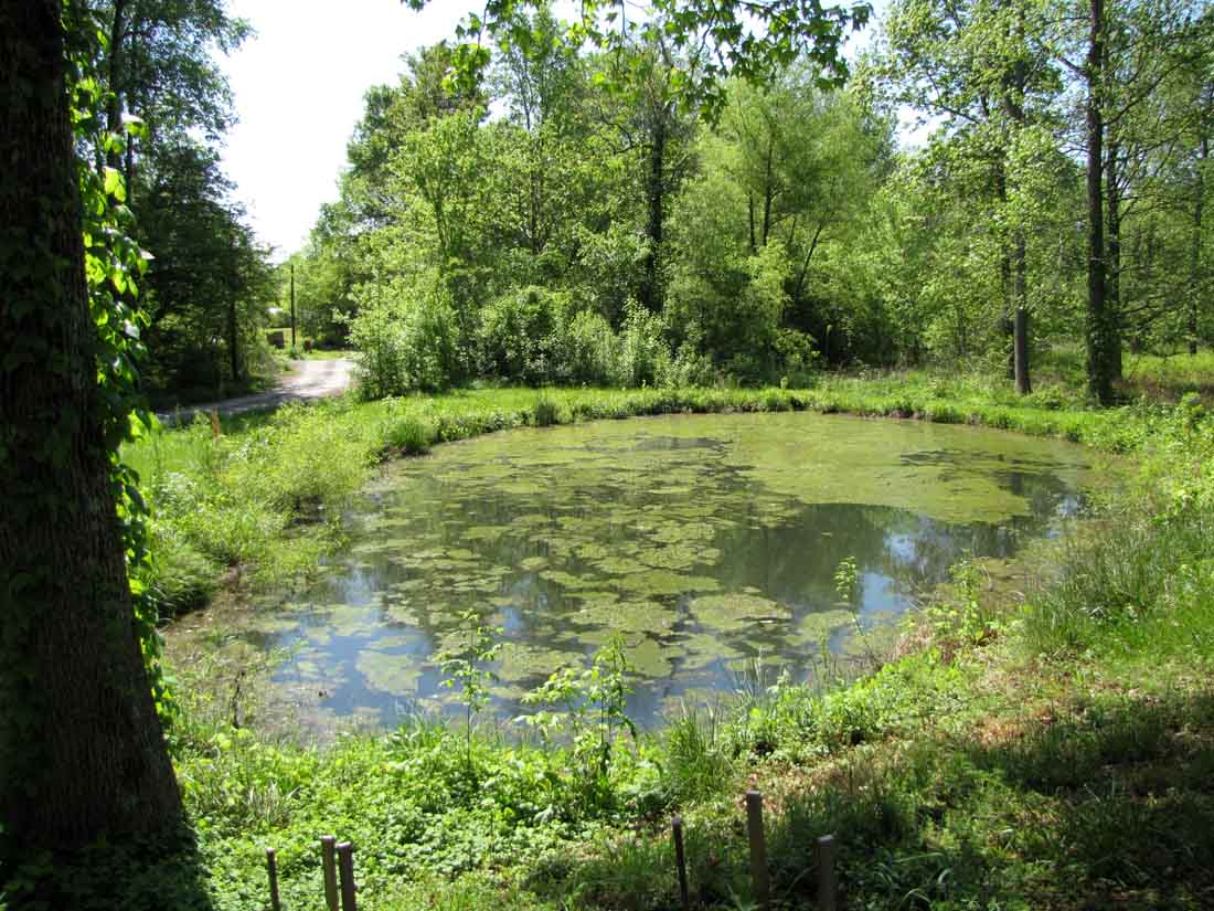 39 end times 39 radio host ebola pandemic might be solution for Pond problems