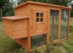 chicken-coop-plans-medium