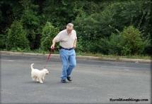 picture of maremma sheepdog puppy