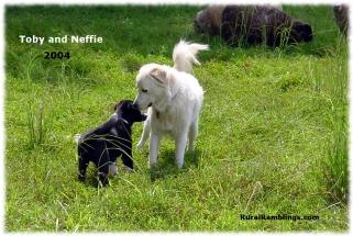 2004 Toby 08-19 Neffie