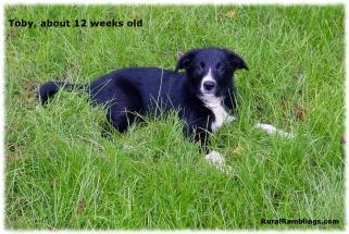 2004 Toby 08-31 pasture