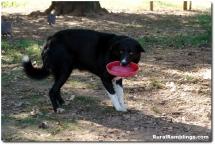 16 2008_09-09 Toby faux frisbee
