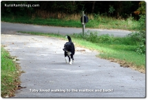 17 2008_09-19 Toby mailbox