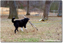 22 2009_03-08 Toby stick