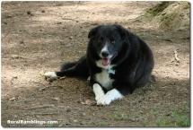 24 2009_06-06 Toby resting