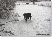 31 2010_12-25 Toby snow