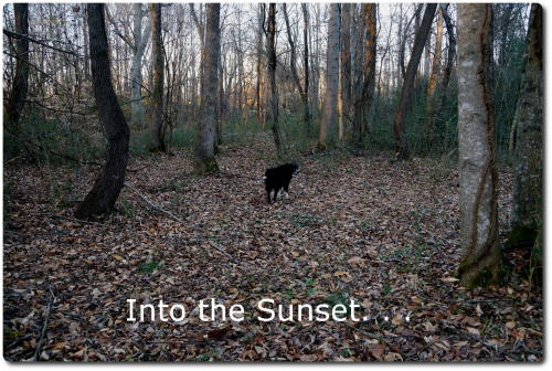 pic of dog in woods